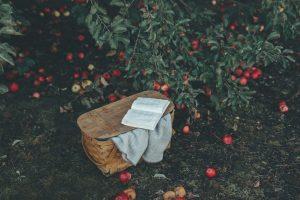 mele-e-libro-1-1200x800